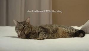 12 05 02 cat