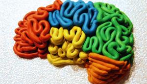 cbc brain