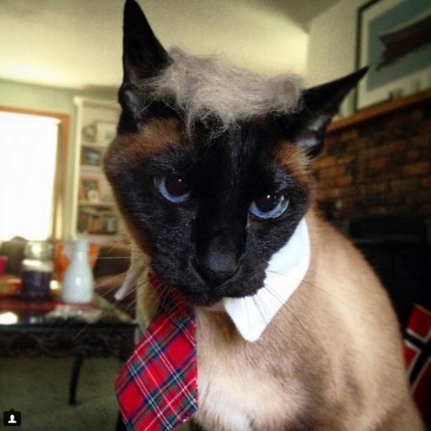 trump cat2