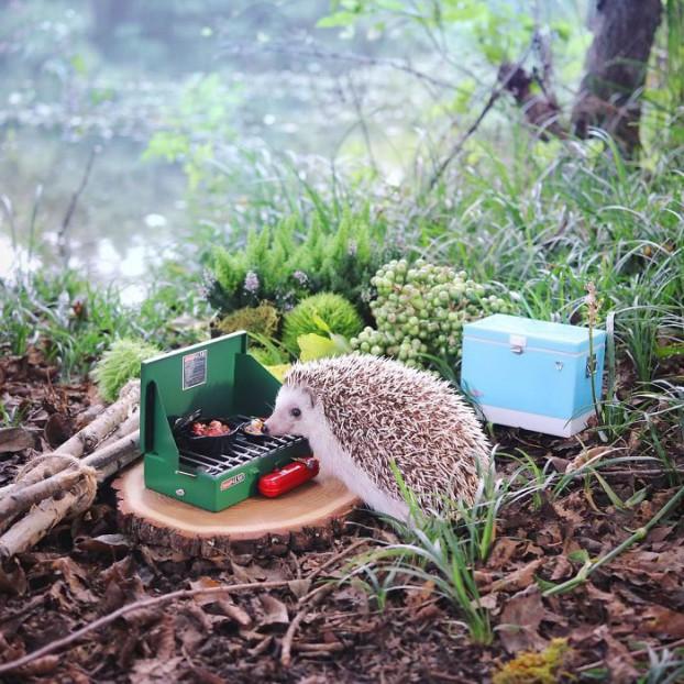 cute-hedgehog-azuki-2-59e5aa1d97335__700