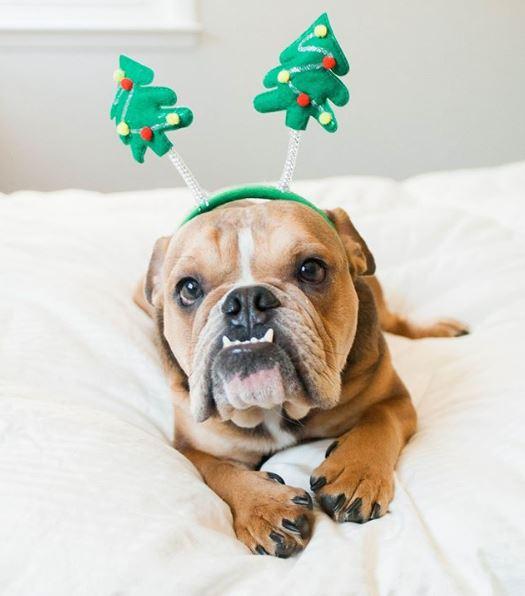 treedog