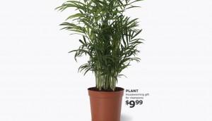 plantcrop