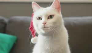 walmart yodelling cat