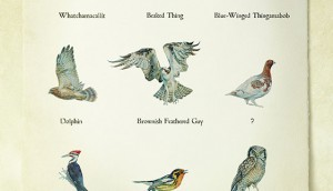 12 08 20 Birds_web