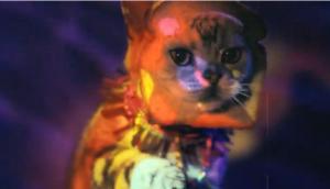12 10 03 cats