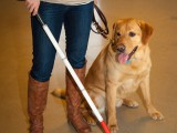 poster_cane[1]
