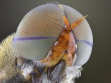 stunning macro photographs of insects