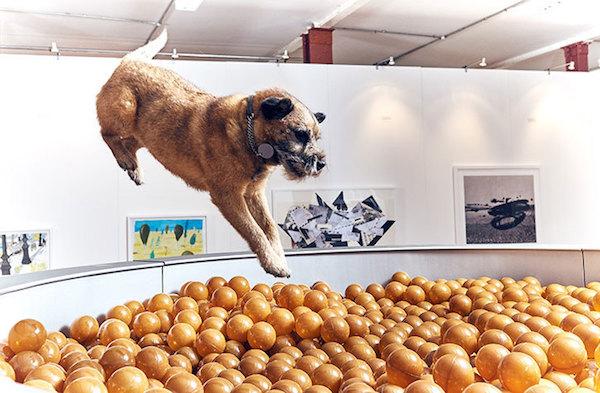 dog art3