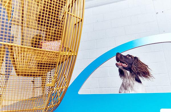 dog art5