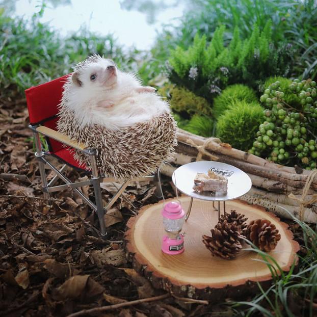 cute-hedgehog-azuki-3-59e5aa21c8962__700