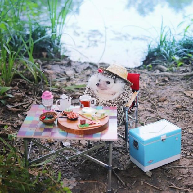 cute-hedgehog-azuki-4-59e5aa242c936__700